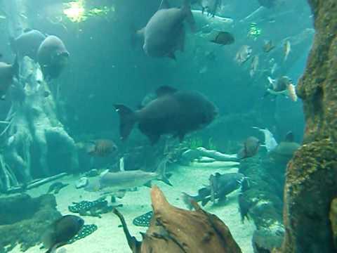 チューブ式トンネルととアマゾン川の魚たち