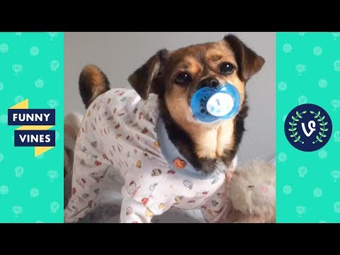 connectYoutube - Funny Animals Vines V2 March 2018 Compilation | Cute Pets, Dogs, Birds, Cats Videos Monthly Montage
