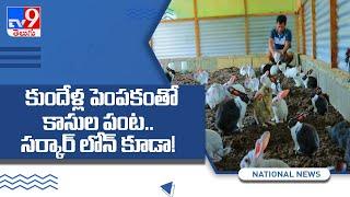 Rabbit Farming: తక్కువ పెట్టుబడితో లాభసాటి వ్యాపారం. ..- TV9 - TV9