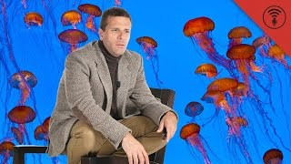 If I Pee on a Jellyfish Sting Will It Really Help? | Don't Be Dumb
