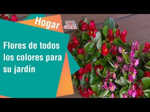 Flores de todos los colores para su jardín | Hogar