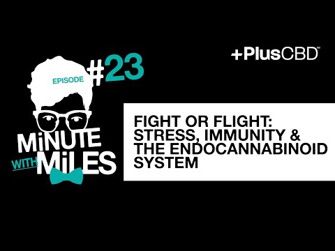 Fight or Flight: Stress, Immunity & the Endocannabinoid System | Minute with Miles