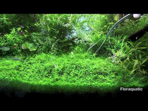 mon bac plant aquarium de 350l download youtube mp3. Black Bedroom Furniture Sets. Home Design Ideas