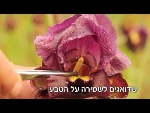 אוניברסיטת תל-אביב מאחלת חג פסח שמח ואביבי!