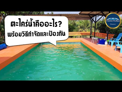 ตะไคร่น้ำคืออะไร-พร้อมวิธีกำจั
