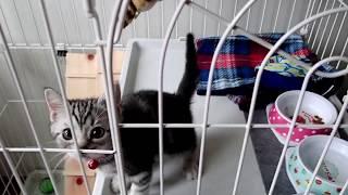 子猫 5ヶ月 留守番『子猫 留守番で寂しがる【ねこ cat】』などなど