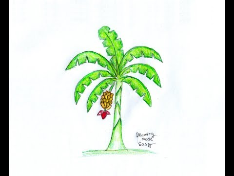Search Result Draw A Banana Tree Tomclip