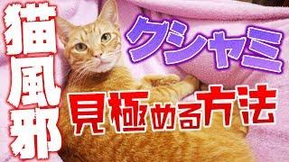 子猫 鼻水『クシャミ連発!猫風邪の種類と病気か見極める7つのポイント!鼻血や鼻水には注意 [4K60fps]』などなど