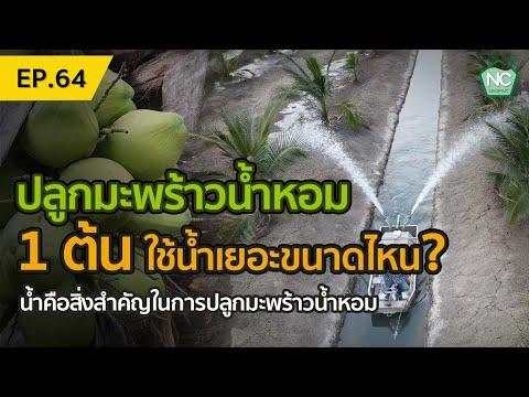 ปลูกมะพร้าวน้ำหอม-1-ต้น-ต้องใช