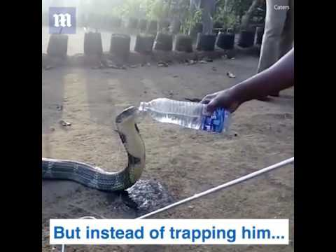 Snake begs for water.