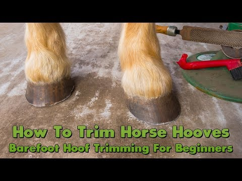 How To Trim Horse Hooves: Barefoot Hoof Trimming For Beginners