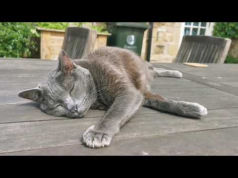 Vlog-เช้าถึงเย็นของแมว-บรรยาก