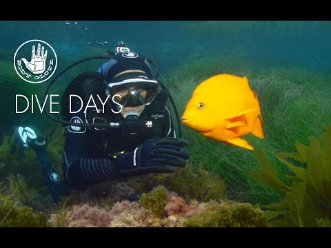 Dive Days