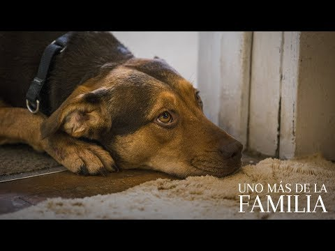 UNO MÁS DE LA FAMILIA. Una historia diferente. En cines 18 de enero.