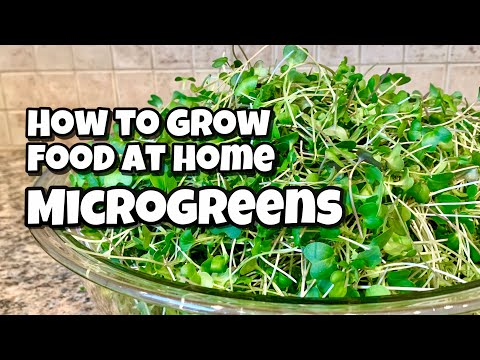 How to Grow Microgreens at Home from Seed to Harvest
