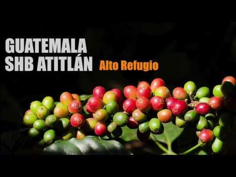 Caffè: Guatemala SHB Atitlan - Alto Refugio - Caffè del progetto Sandalj Traceability