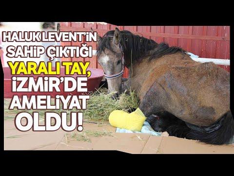 Haluk Levent ve AHBAP, 23 Bakıma Muhtaç Hayvanı Sahiplendi