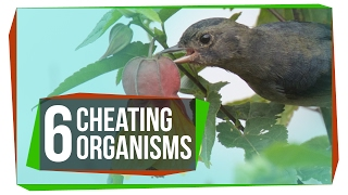 6 Organisms That Cheat the System