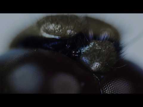 Lumnia fluefanger