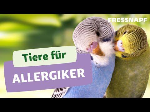 Geeignete Tiere für Allergiker
