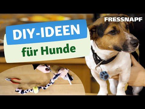 DIY-Ideen für Hunde - Basteln für euren besten Freund