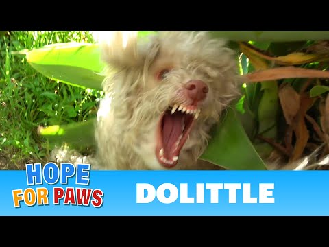 I didn't realize the poodle was blind until the rescue was over!!!