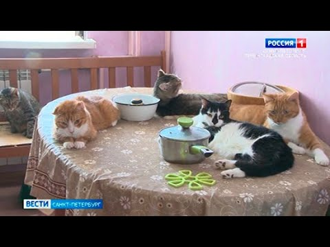 Сколько кошек и собак может проживать в одной квартире?