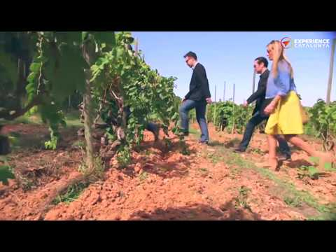 Enjoy discovering the wines and cavas of the celebrated Penedes region