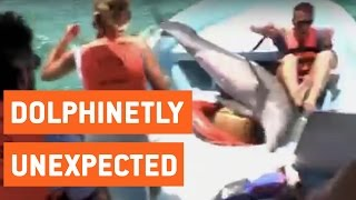 Dolphin Accidentally Jumps Into Boat