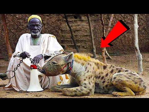 Самые Опасные Домашние Животные в Мире