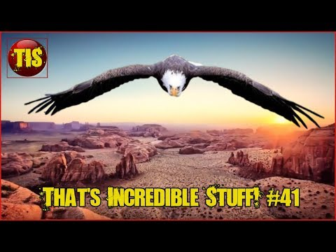 Amazing People Compilation やばい | Amazing People Video's, Skills & Nature  | That's Incredible! #41