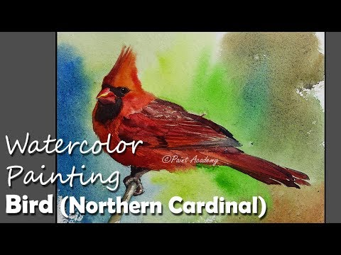 Watercolor Painting Bird : Northern Cardinal | step by step