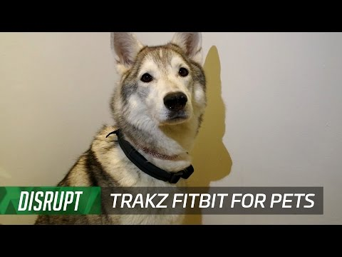Trakz is a Fitbit with GPS for your dog or cat