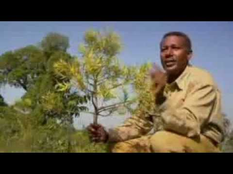 Agroecology in Ethiopia: Converting Desert into Hyper-Productive Land