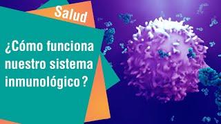 ¿Cómo funciona nuestro sistema inmunológico | Salud
