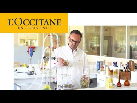 Divine Harmony - Supreme Synergy Youth Care | L'Occitane