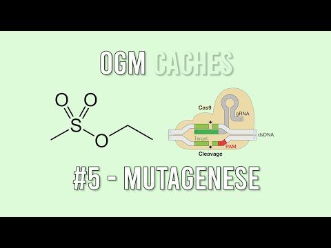 OGM Cachés - 5 : Mutagénèse