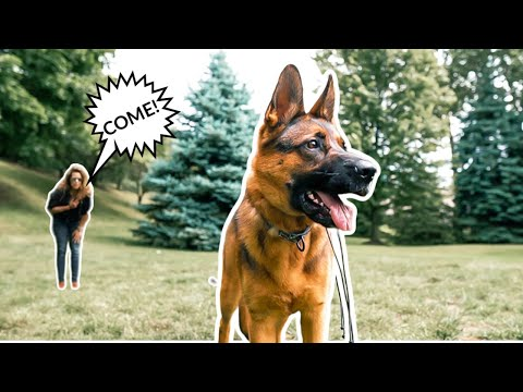 YOUR DOG NOT COMING WHEN CALLED? HOW TO PUNISH YOUR DOG OFF LEASH!