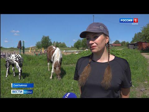 Жеребёнком-далматинцем из Коми заинтересовался владелец известного конного клуба России