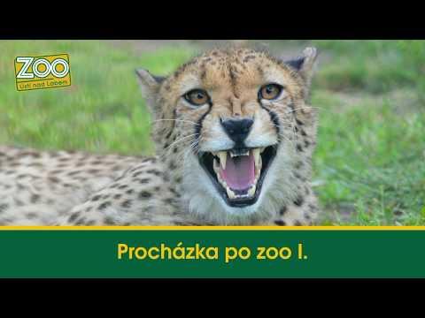 Procházka po zoo I.