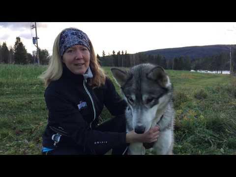 Träna kommando med din hund