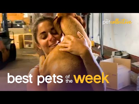 The Most Heartwarming Pet Parent Moment Ever | Best Pets of the Week