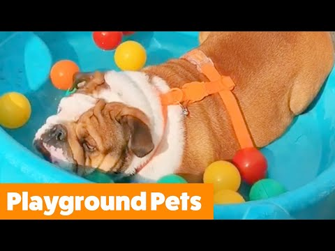 Cute Playground Pets | Funny Pet Videos
