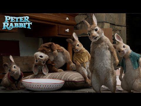 PETER RABBIT. Entrenamiento duro. En cines 23 de marzo.
