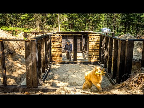 Building a DIY Basement for my OFF GRID LOG CABIN in the WILDERNESS   Aggressive Bear Visits