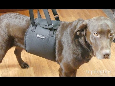 SleekSide Dog Lift Sling Review