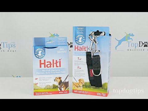 The Company of Animals Halti No-Pull Harness and Training Lead Review