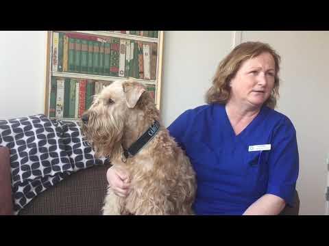 Ersta Näsbypark Parkinsonboende Möt terapihunden Leo