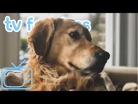 8 HOURS Dog TV COMPILATION! A Mix of Fun TV and Relaxing Music for Dogs!