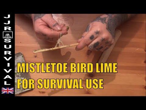 Survival Bird Lime From Mistletoe